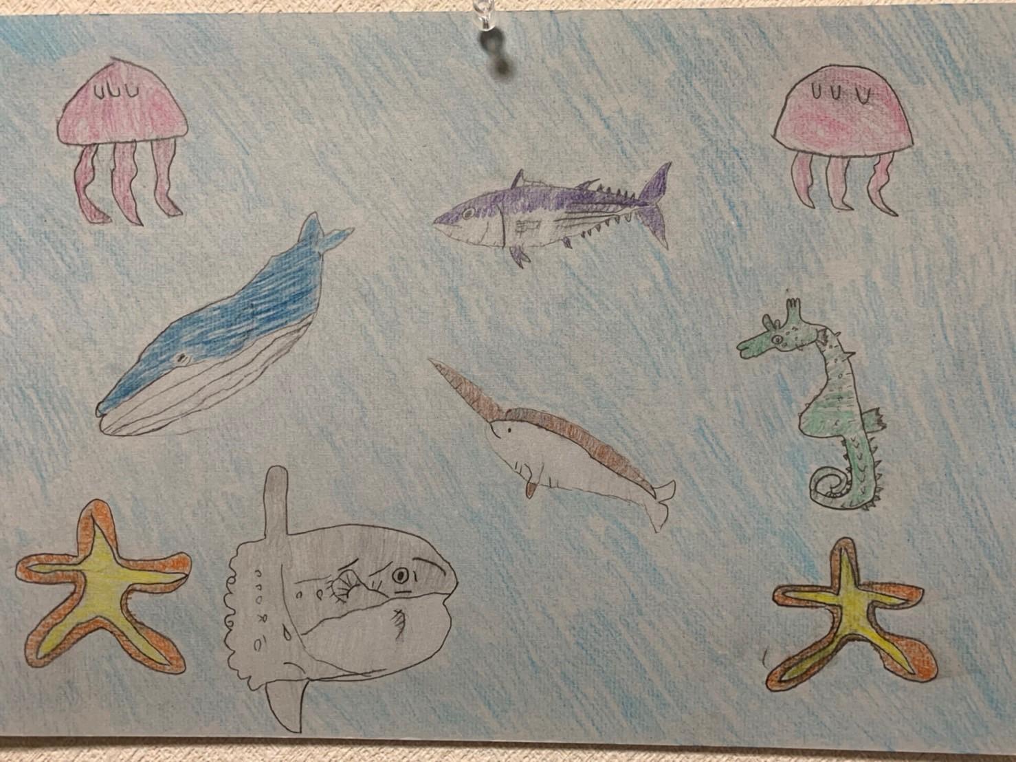 14小林羽琉くん6年長野市 まだ見たいことのない海の生き物を見てみたい