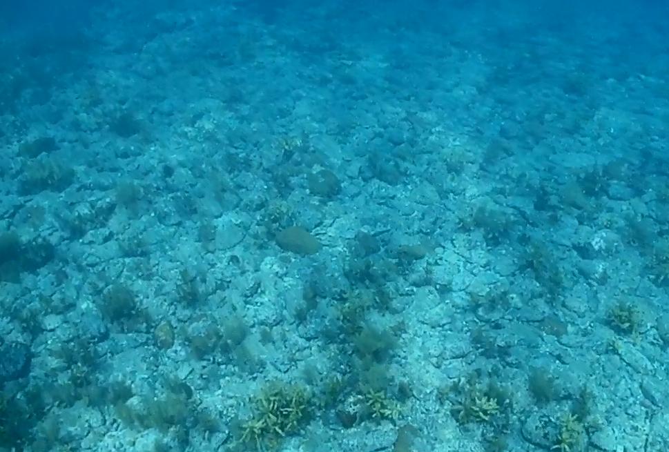 海の学習4
